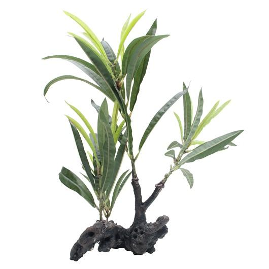 "Fluval Willow Leaf Hygrophila Plant on Root 30cm (11"")-Fake Plants-Lincs Aquatics Ltd"
