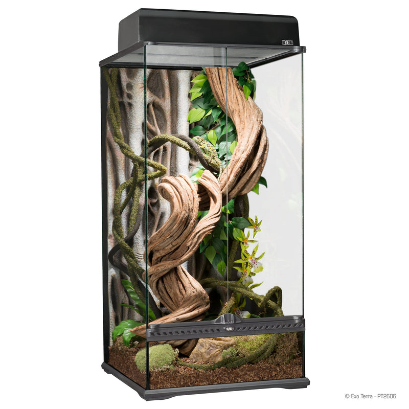 Rainforest Terrarium-Terrarium-Lincs Aquatics Ltd