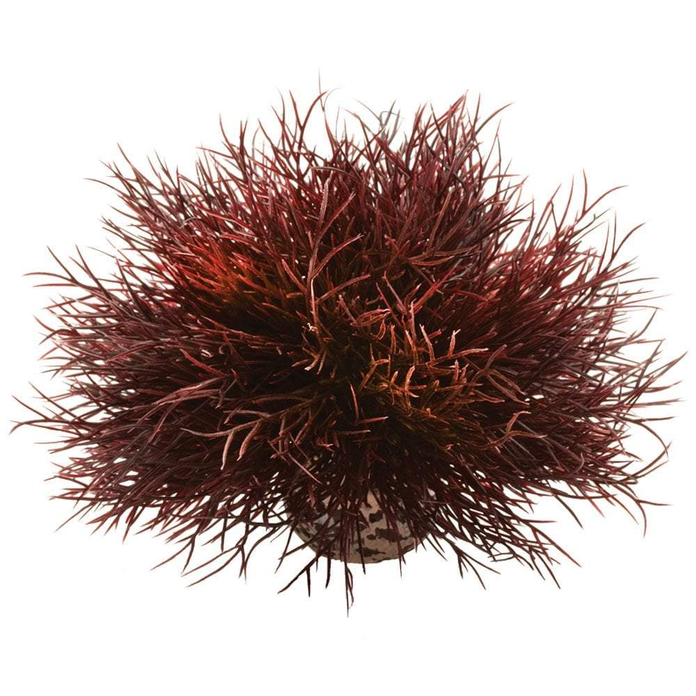 biOrb Aquatic sea lily crimson-biOrb-Lincs Aquatics Ltd