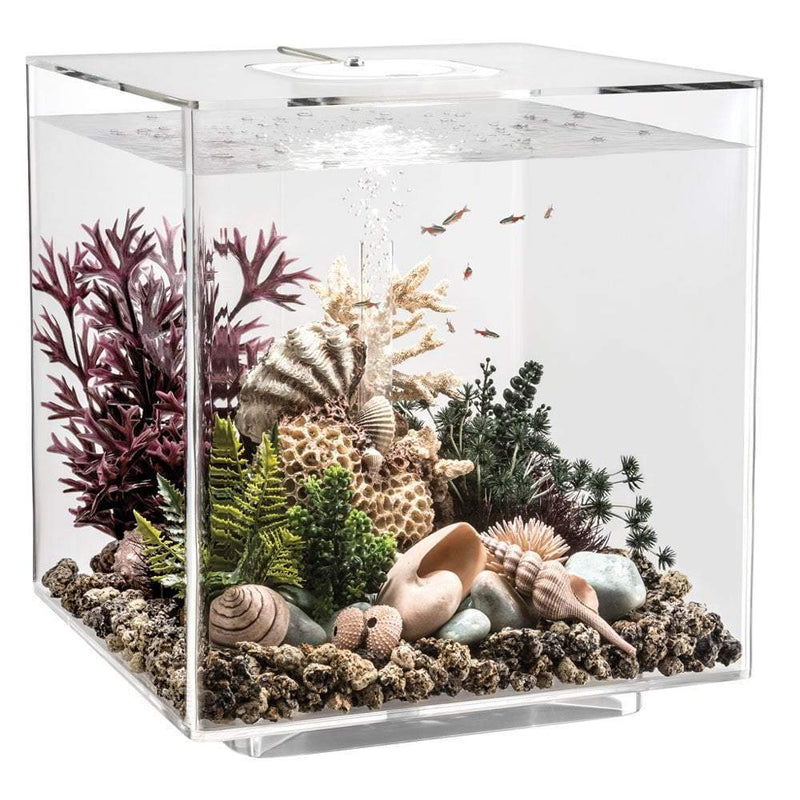 biOrb CUBE 60 LED clear-biOrb-Lincs Aquatics Ltd