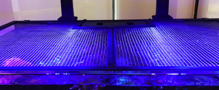 Red Sea DIY Aquarium Net Cover Jump Guard 60cm x 60cm-Tank Covers-Lincs Aquatics Ltd