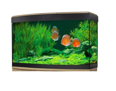 Fluval Vicenza 180 LED Aquarium Oak without cabinet-Fluval Freshwater Aquariums tank only-Lincs Aquatics Ltd