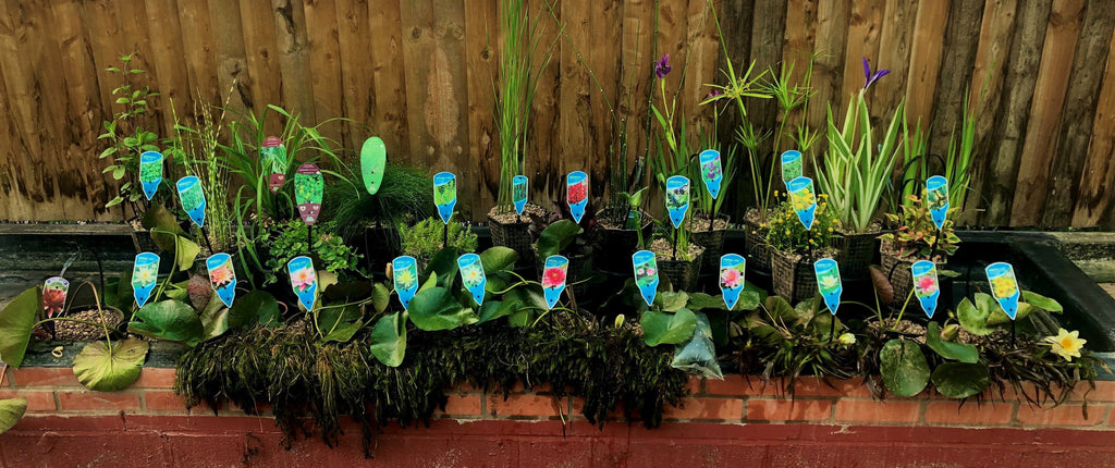 Pond plant selection for 25-30 yds/meters-Lincs Aquatics Ltd