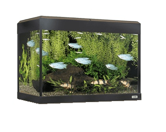 Fluval Roma LED 90 aquarium Walnut-Fluval Freshwater Aquariums tank only-Lincs Aquatics Ltd