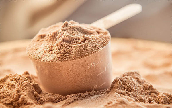 Whey protein isolate cung cấp nguồn protein tinh khiết