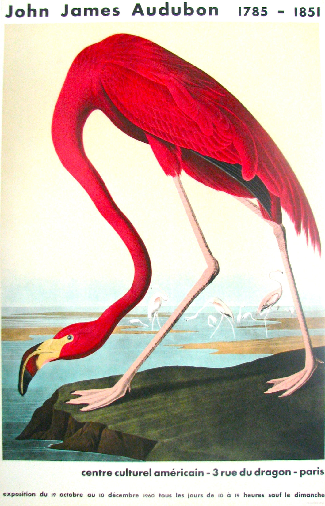 American Flamingo by John James Audubon 1960