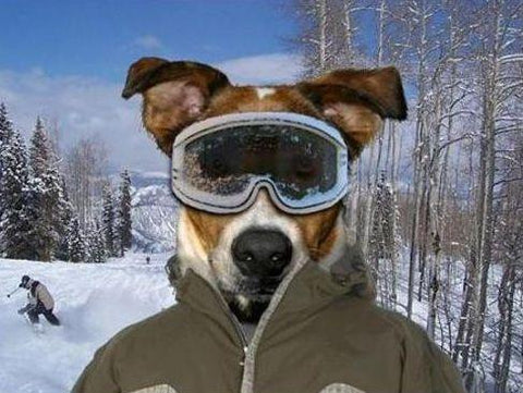 Everything You Need To Know About Dog Ski Goggles