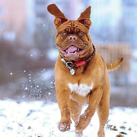 Dog Snow Gear & Wear | Canine Winter Clothes - Cheap Online Sale