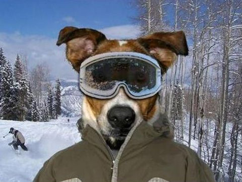 4f460cc722 Dog Ski Goggles Fundamentals Explained. Read our guide to learn everything you  need ...
