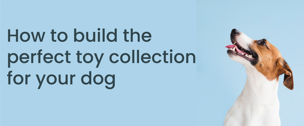 How to build the perfect toy collection for your dog