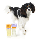 Super Shine Dog Shampoo + Conditioner Bundle