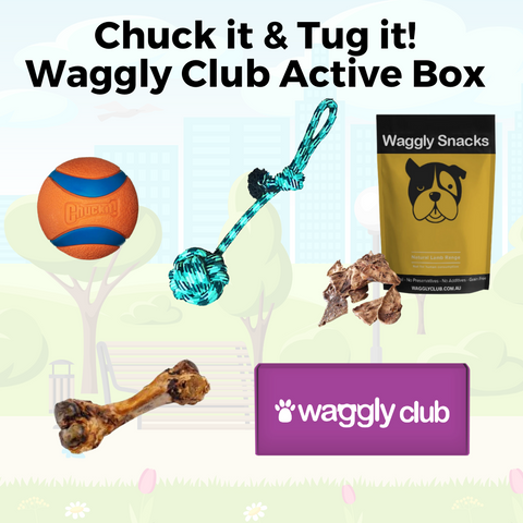 Chuck it and Tug it Waggly Club Active Box