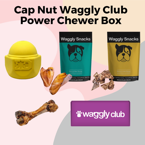Cap Nut Waggly Club Power Chewer Box
