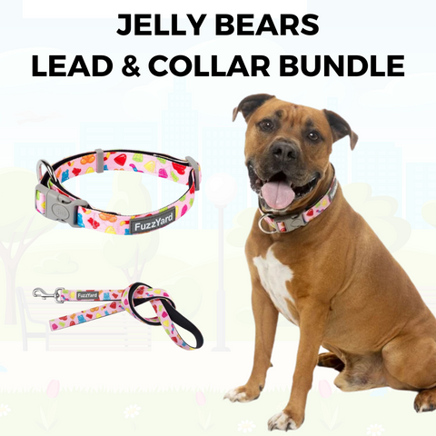 Jelly Bears Lead and Collar Bundle