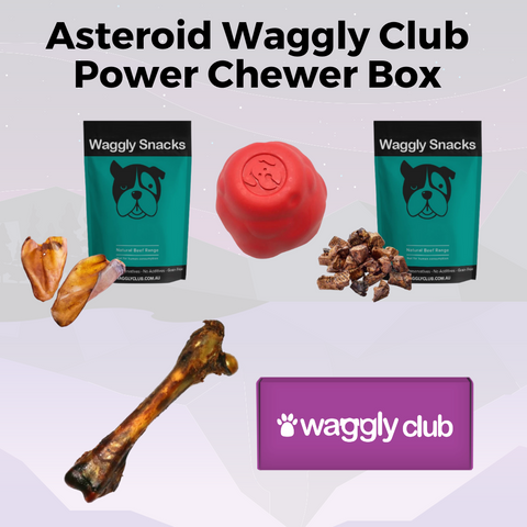 Asteroid Power Chewer Box