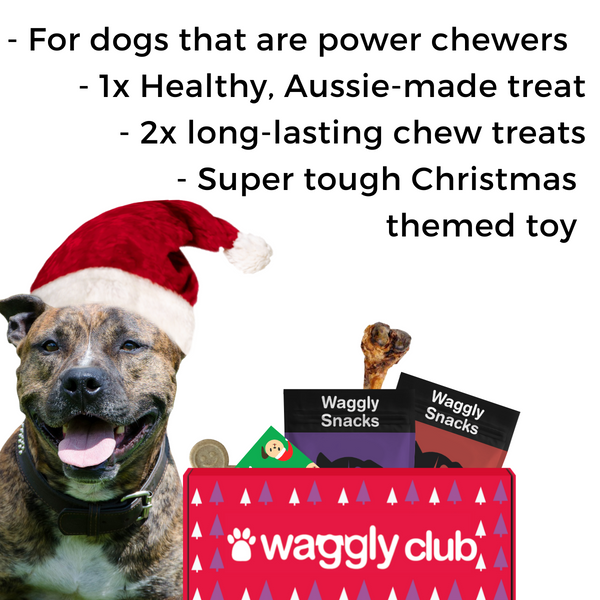 KONG Bestsellers Plush Bundle