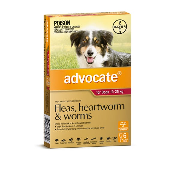 Advocate for Dogs 6-Pack