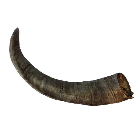 Goat Horn (Very Long Lasting Chew Treat)