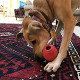 Football Chew Toy