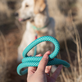 Mod Essential Leash - Teal