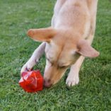 Aussie Dog Monster Treat Ball Red