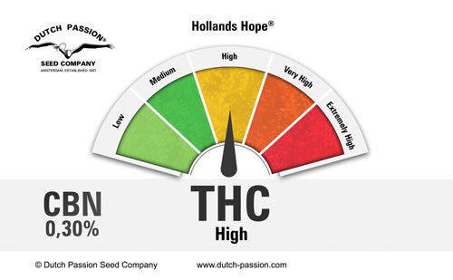 HOLLANDS HOPE (DUTCH PASSION) FEMINIZADA a la venta en Panteón Grow Shop. Semillas Feminizadas de la marca Dutch Passion. Plantas de marihuana