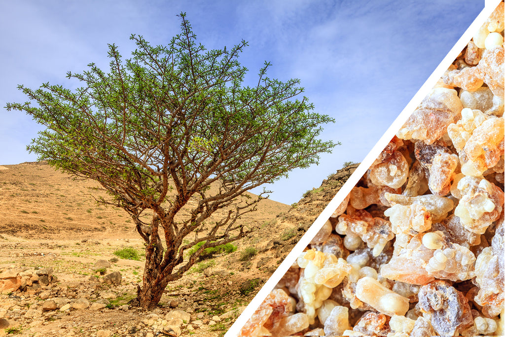 The Surprising Truth About Frankincense