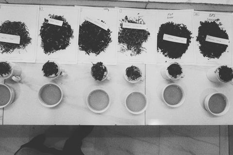 chai-walli-tasting-cupping-india-farm
