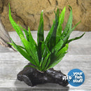 Microsorum pteropus Java Fern on Driftwood