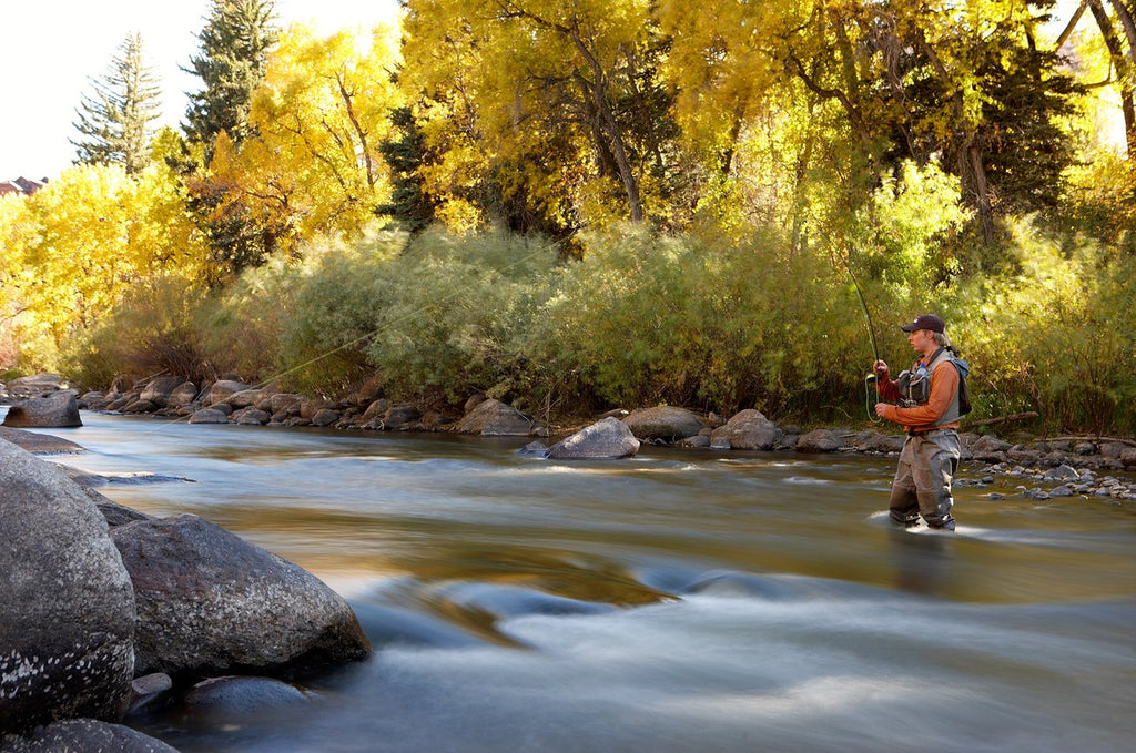 Fly Fishing Colorado's Gold Medal Trout Waters!