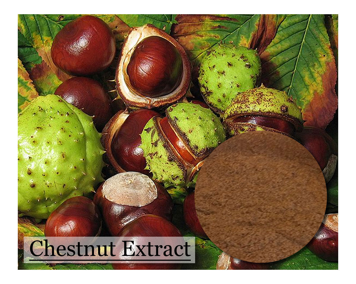 Chestnut Extract - 16oz - Wholesale