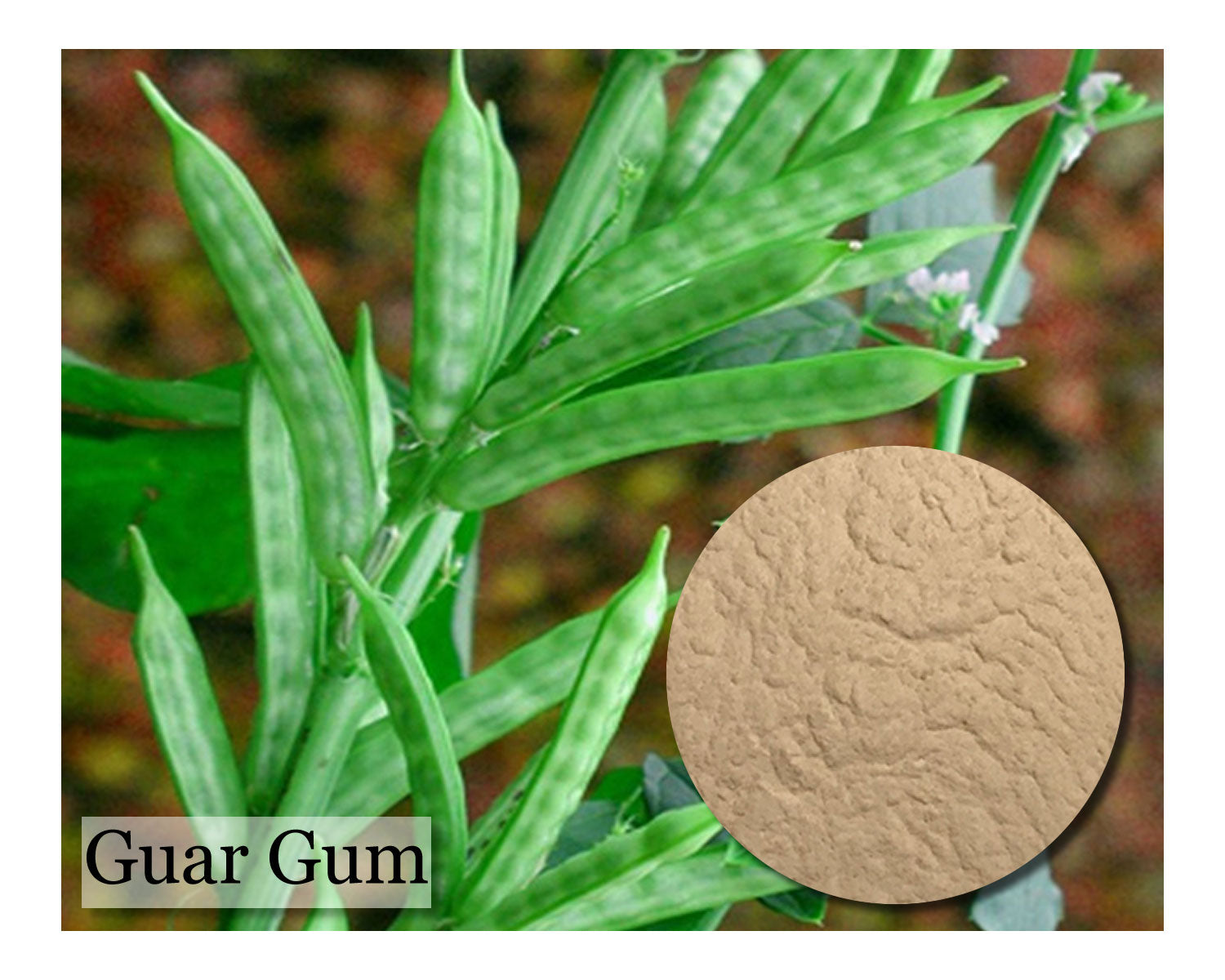 Guar Gum Powder - 4 oz