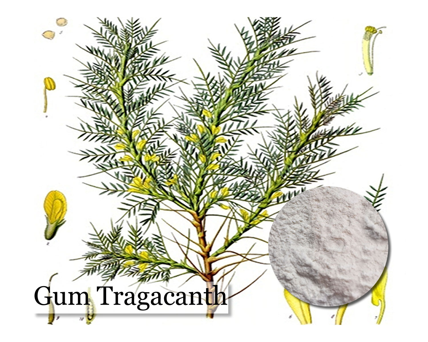 Gum Tragacanth Powder - 1kg - Wholesale