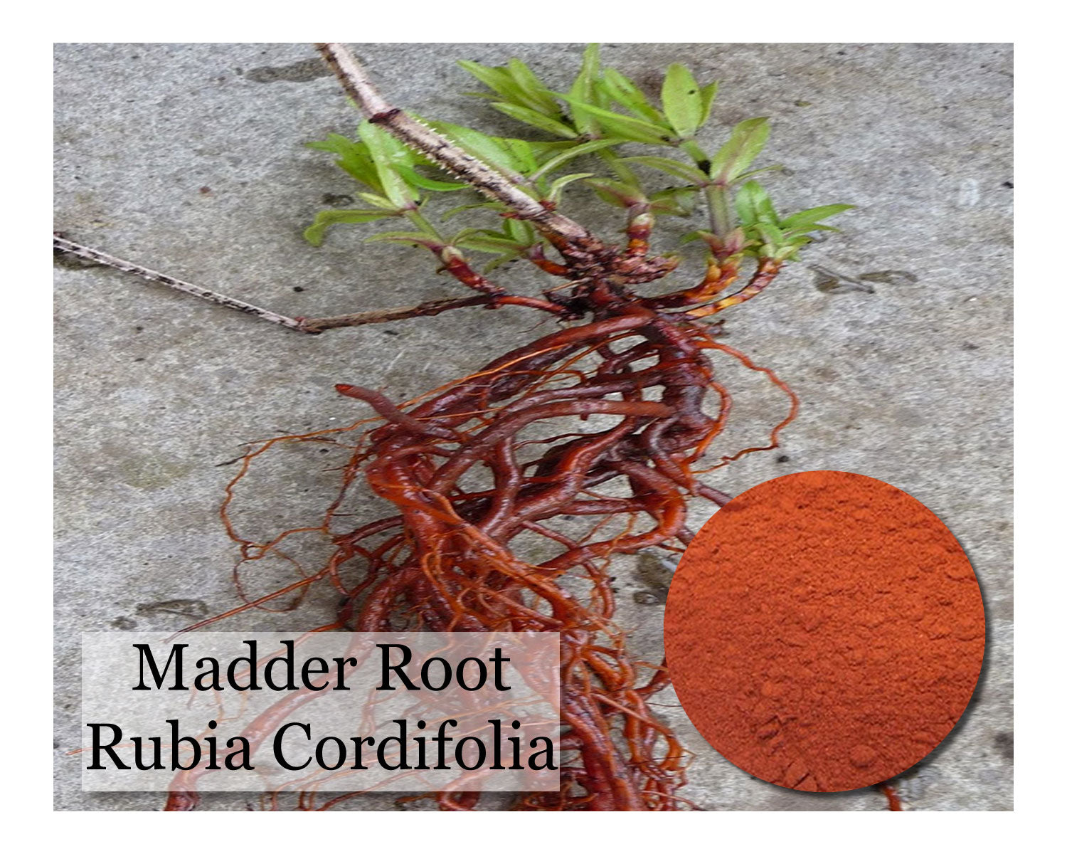 Madder - Rubia Cordifolia - Powder - 16 oz - Wholesale