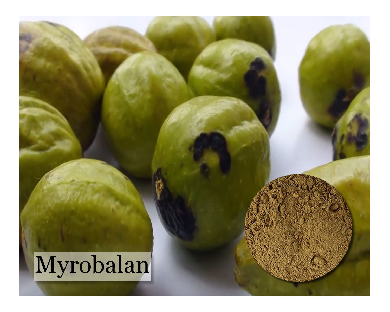 Myrobalan - 16 oz - Wholesale