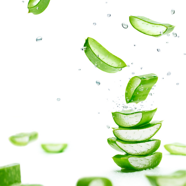 11 Little Known Benefits Of Aloe Vera