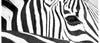 Coffee Mug BW18 Zebra