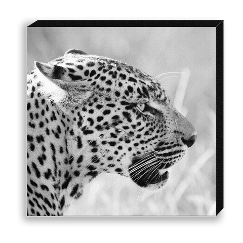 CANVAS 30*30 BW03 Leopard