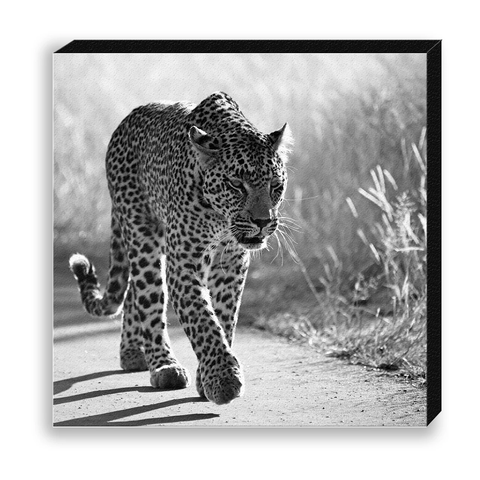 CANVAS 30*30 BW05 Leopard