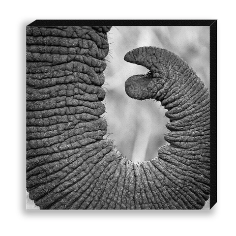 CANVAS 30*30 BW17 Elephant