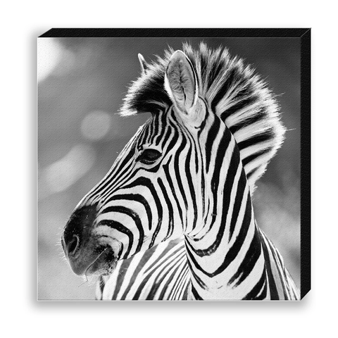 CANVAS 30*30 BW22 Zebra