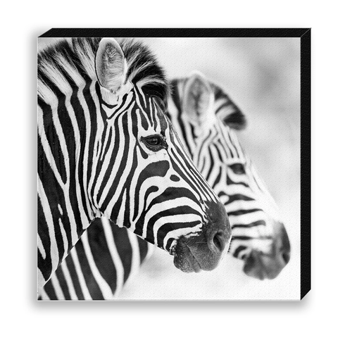 CANVAS 30*30 BW25 Zebra