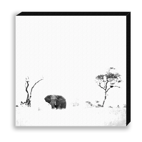 CANVAS 30*30 BW31 African Elephant