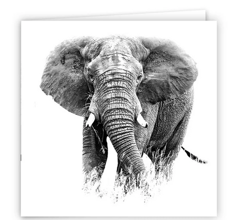 Large Greeting Card GC162 African Elephant