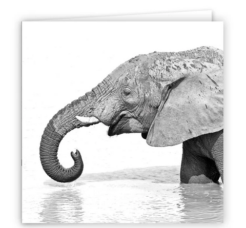 Large Greeting Card GC150 African Elephant
