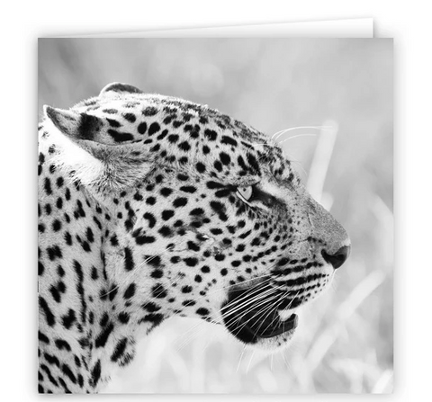 Large Greeting Card GC144 Leopard