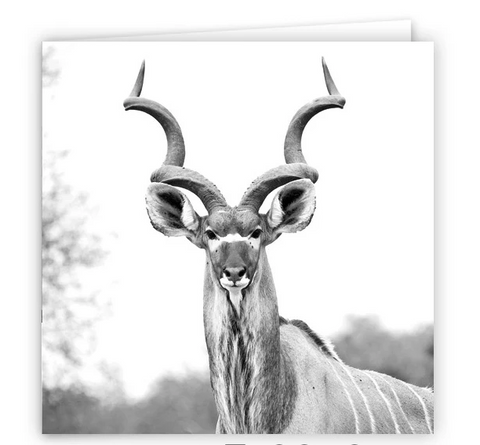 South African Greater Kudu Large Greeting Card 6""