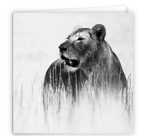 Large Greeting Card GC110 Lioness