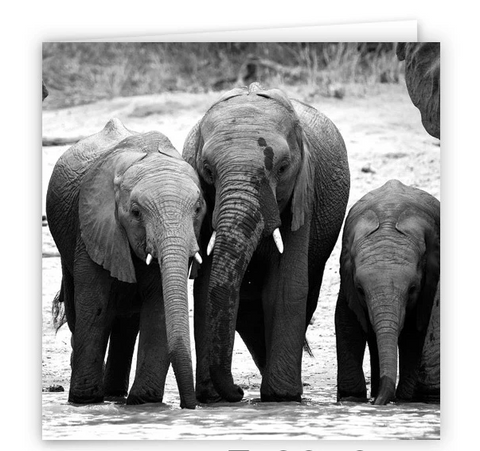 Large Greeting Card GC102 African Elephant