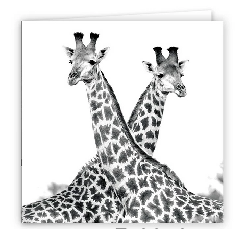 Large Greeting Card GC155 Zebra